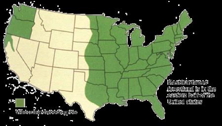 American Hardwoods Renewable Abundant Sustainable Bull - Us forest cover map